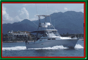 Puerto Vallarta Mexico Fishing Vacation - Details for Champagne Fishing charter